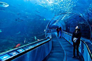 Aquarium of the Bay - San Francisco Event Venues
